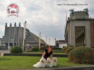 Coton de Tulear Euro Dog Show 2016