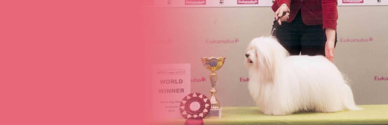 Coton de Tulear World winner 2013